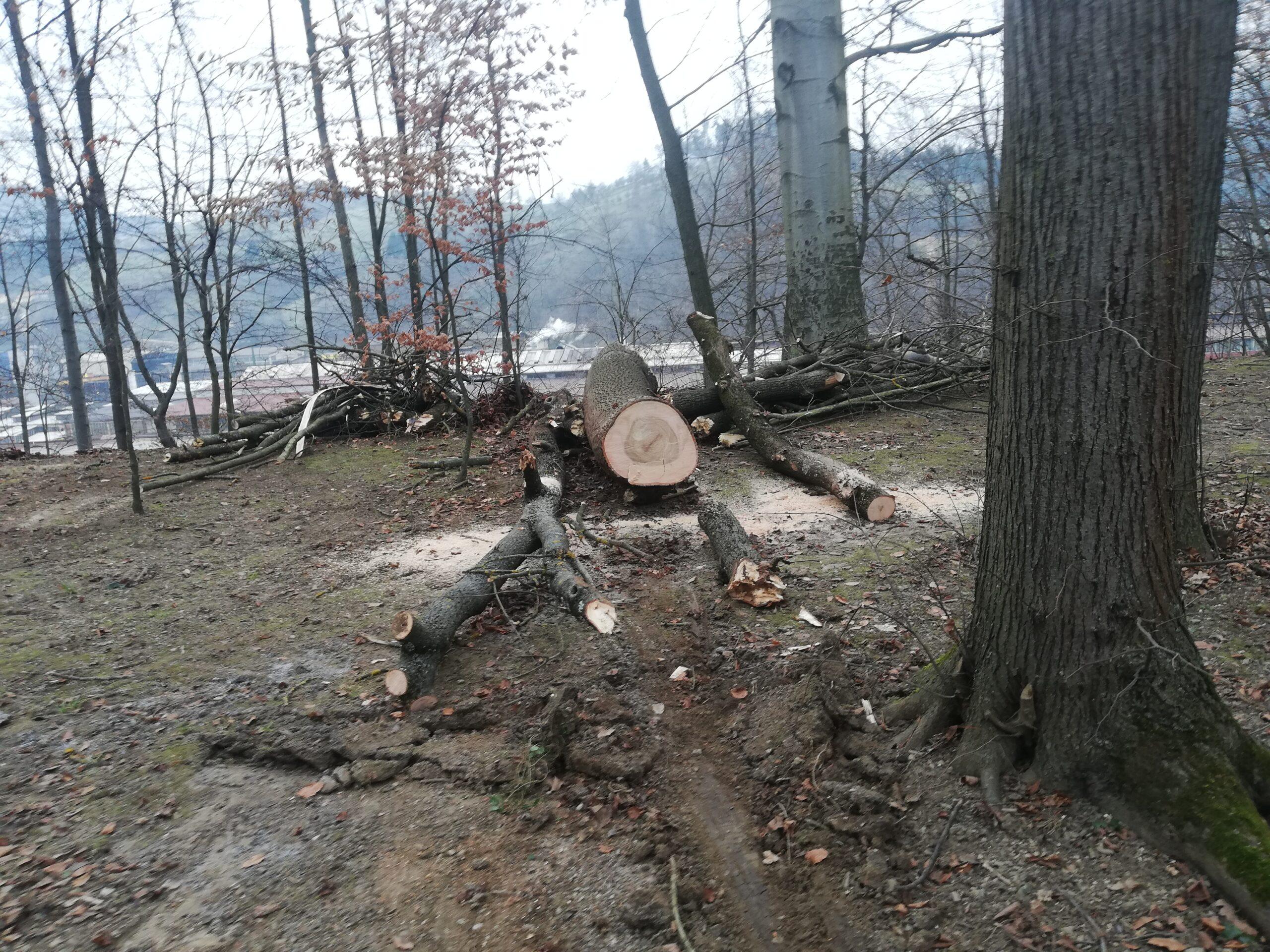Razrezan hlod lesa v parku